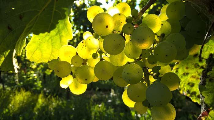 Weinvorteil Gutschein